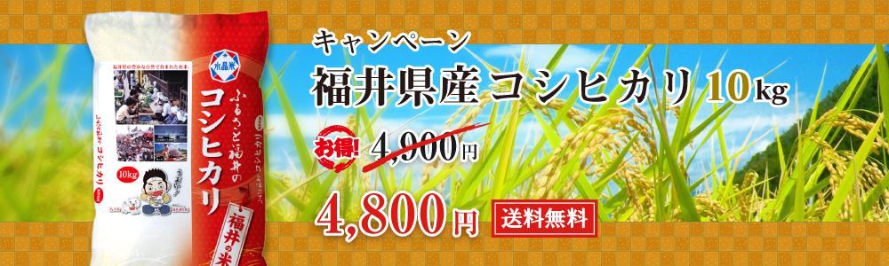 福井県産コシヒカリ10kg 4,800円