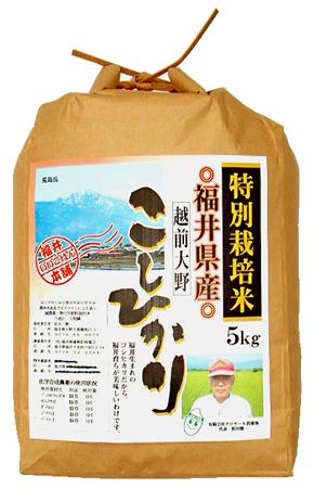 福井県産特栽菖蒲池コシヒカリ 31年産