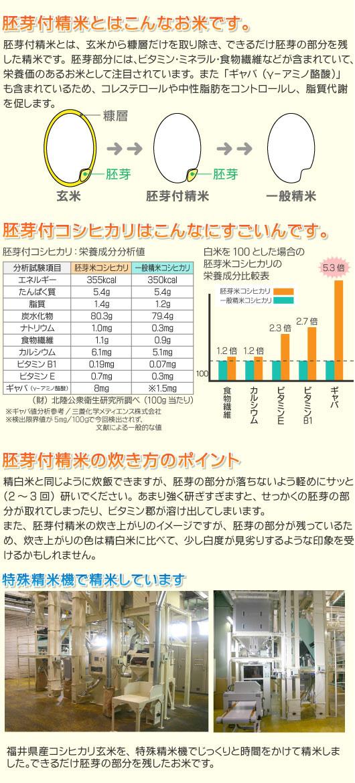 福井県産胚芽付コシヒカリ 令和2年産
